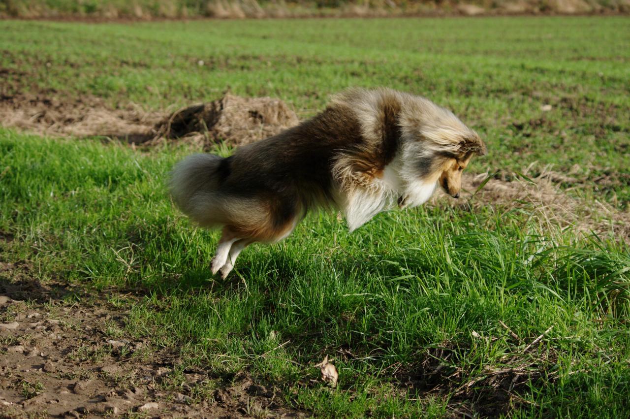 isard chase la souris