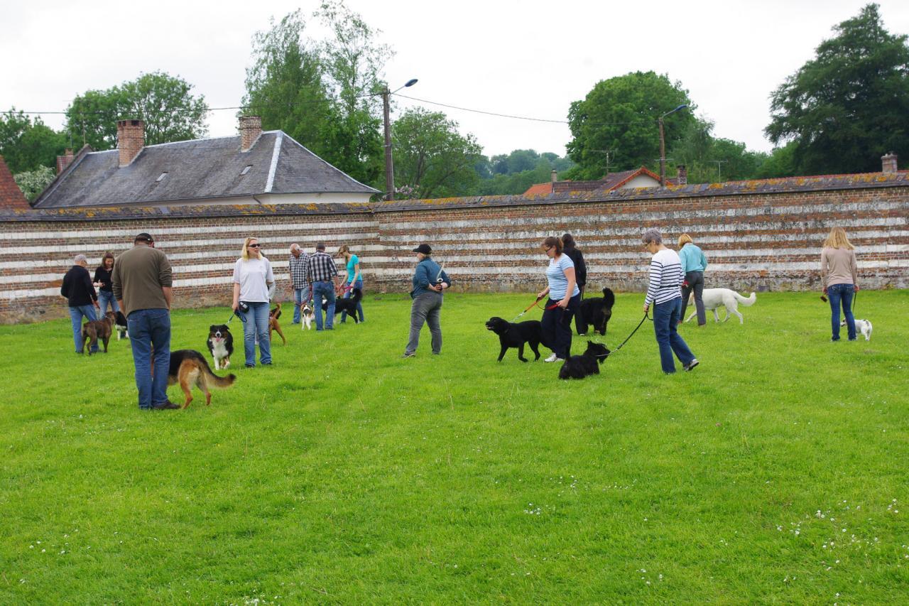 Cours collectif d'éducation canine 1er juin 2013